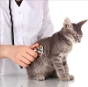Ветеринарные клиники в Киселевске